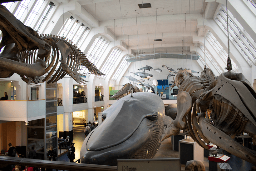 Natural History Museum Mammals halll