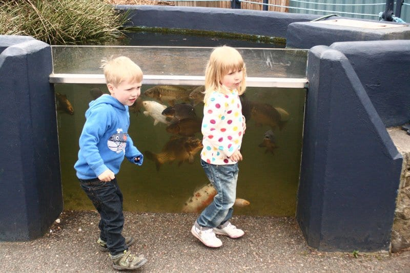 kids exploring Anglesea Sea Zoo looking at the exhibits and learning about British Marine Life